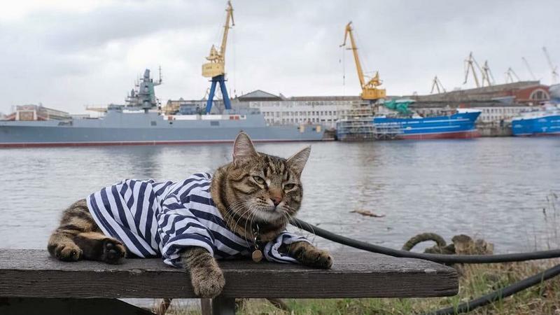 Кот Матрос Васильевич/ Фото: vk.com/aoosk